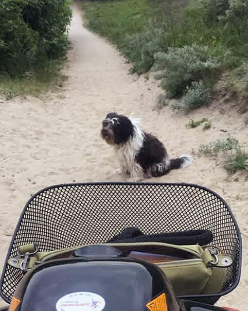 Chien assis devant un scooter de mobilité réduite pour personne senior et handicapée
